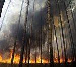 TETRA sprawdziła się podczas akcji gaszenia pożarów w Rosji.