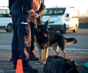 belgian-police-K9-drug-sniffing-dog.jpg